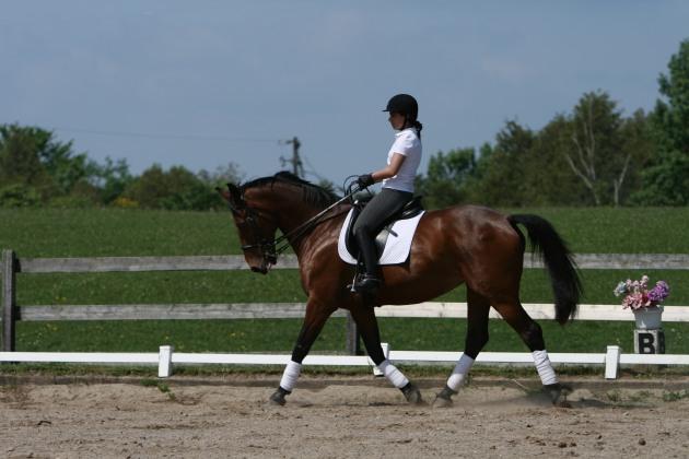 Henna & Canadian Sport Horse Rezina (Copyright Cheryl Ogilvie 2008)