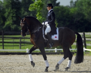 Rheirattack is a licensed Canadian Sport Horse Stallion. He is the first ever Canadian bred dressage stallion to be approved as a breeding stallion by the Oldenburg Verband, and is the first Canadian bred horse to be listed in the WBFSH dressage rankings. For more information go to http://www.rideauwoodfarm.com/rheirattack.html.